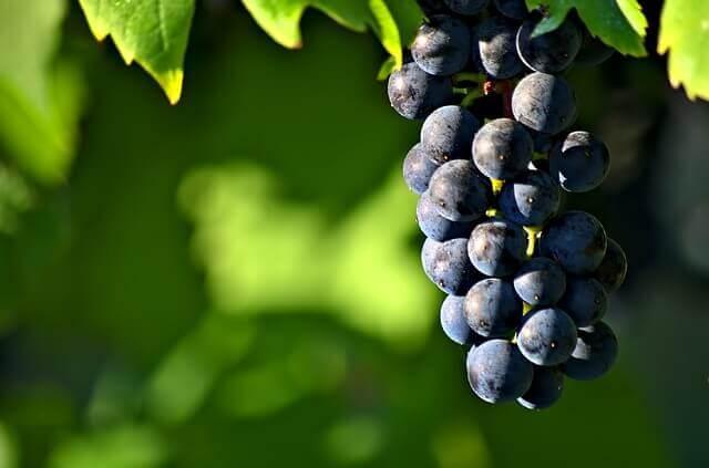 grapes-sparmatseto(1)